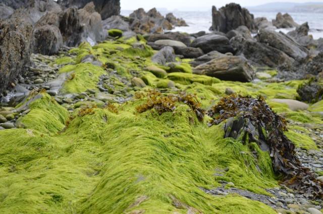 the neon green of Irish Moss | a happy stitch